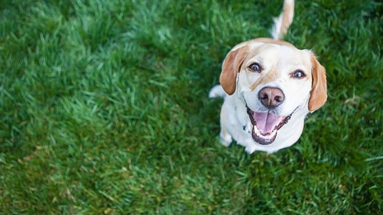 Come evitare le bruciature da urina dei cani sul prato - Eliminare odore pipi cane giardino ...