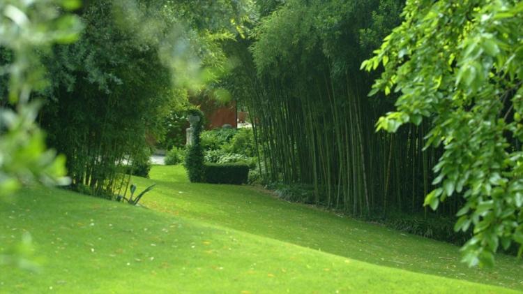 Come scegliere i semi per il prato del vostro giardino - Erba nana per giardino ...